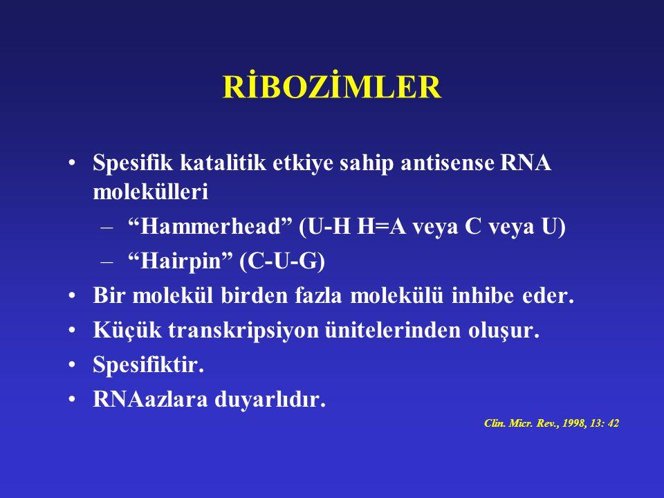 """RİBOZİMLER Spesifik katalitik etkiye sahip antisense RNA molekülleri – """"Hammerhead"""" (U-H H=A veya C veya U) – """"Hairpin"""" (C-U-G) Bir molekül birden faz"""