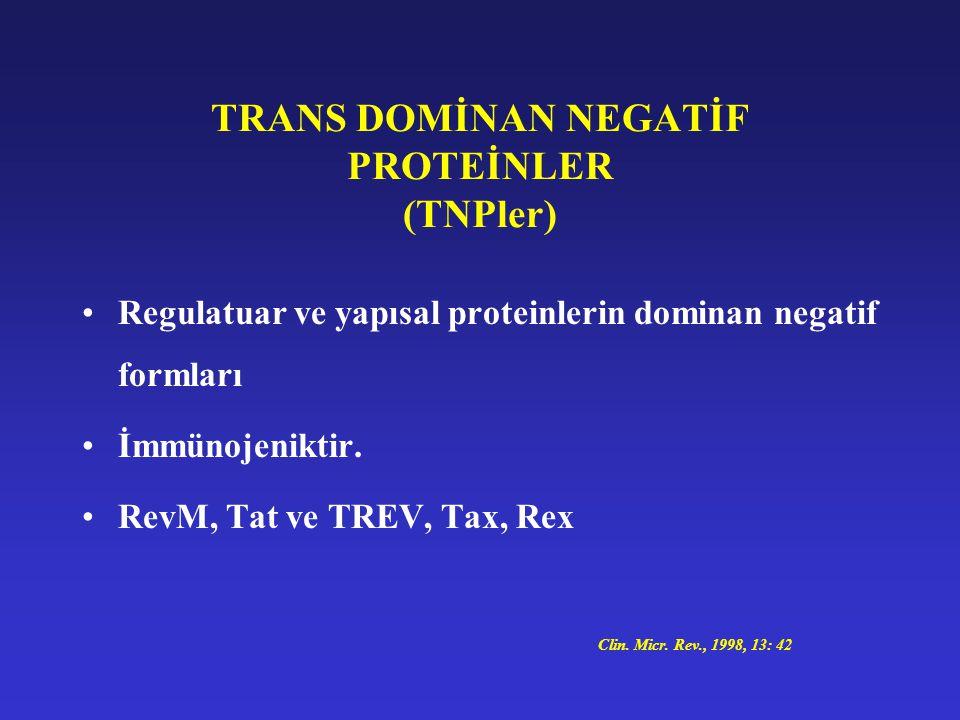 TRANS DOMİNAN NEGATİF PROTEİNLER (TNPler) Regulatuar ve yapısal proteinlerin dominan negatif formları İmmünojeniktir. RevM, Tat ve TREV, Tax, Rex Clin