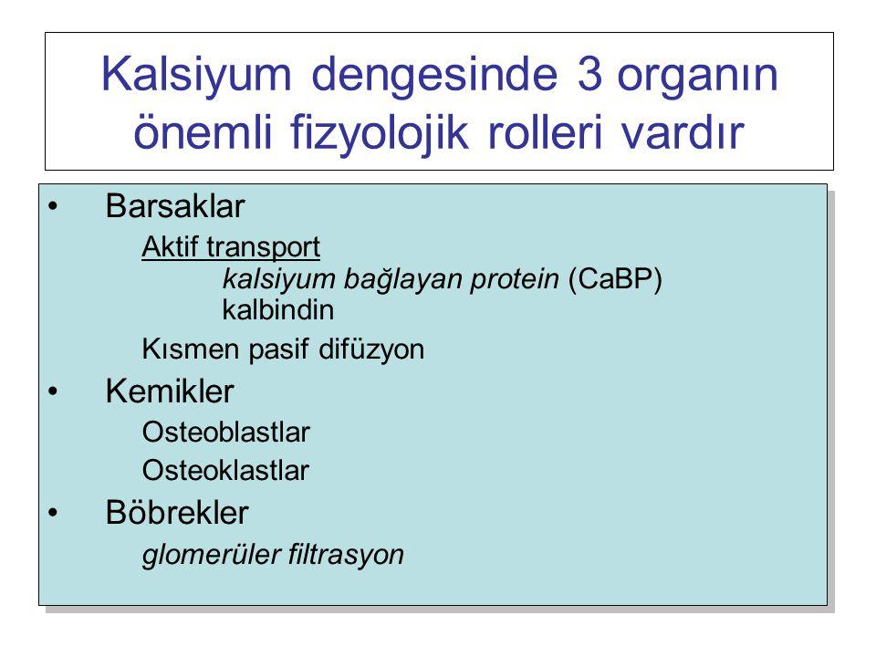 Kalsiyum dengesinde 3 organın önemli fizyolojik rolleri vardır Barsaklar Aktif transport kalsiyum bağlayan protein (CaBP) kalbindin Kısmen pasif difüzyon Kemikler Osteoblastlar Osteoklastlar Böbrekler glomerüler filtrasyon Barsaklar Aktif transport kalsiyum bağlayan protein (CaBP) kalbindin Kısmen pasif difüzyon Kemikler Osteoblastlar Osteoklastlar Böbrekler glomerüler filtrasyon