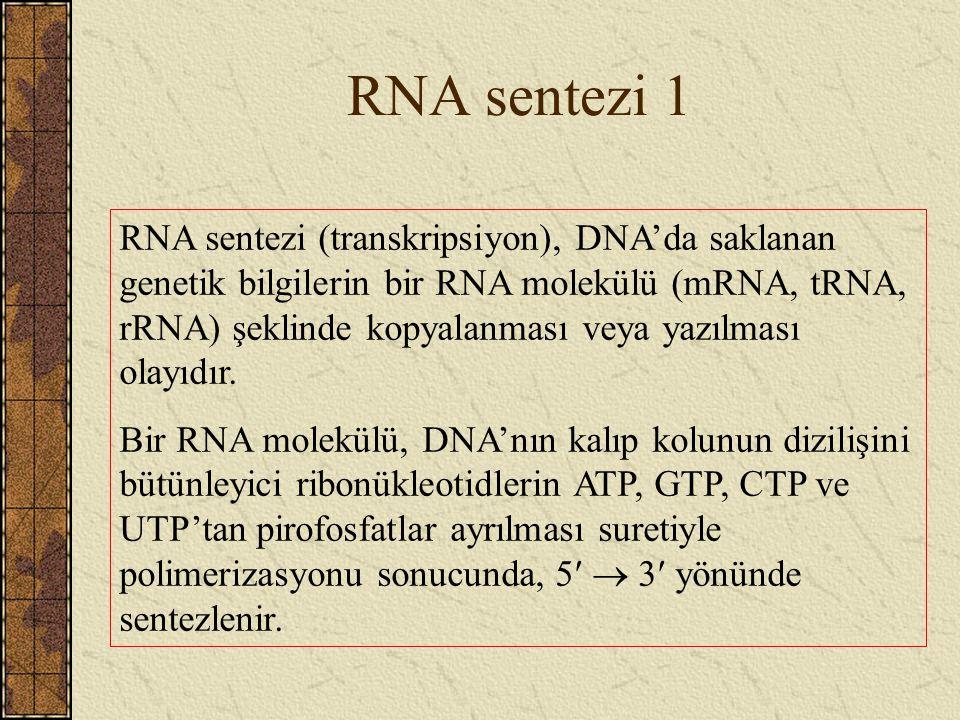 RNA sentezi 1 RNA sentezi (transkripsiyon), DNA'da saklanan genetik bilgilerin bir RNA molekülü (mRNA, tRNA, rRNA) şeklinde kopyalanması veya yazılmas