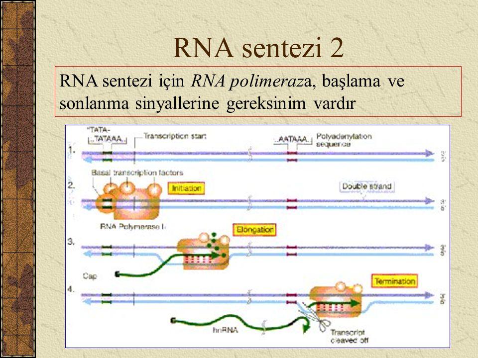 RNA sentezi 2 RNA sentezi için RNA polimeraza, başlama ve sonlanma sinyallerine gereksinim vardır
