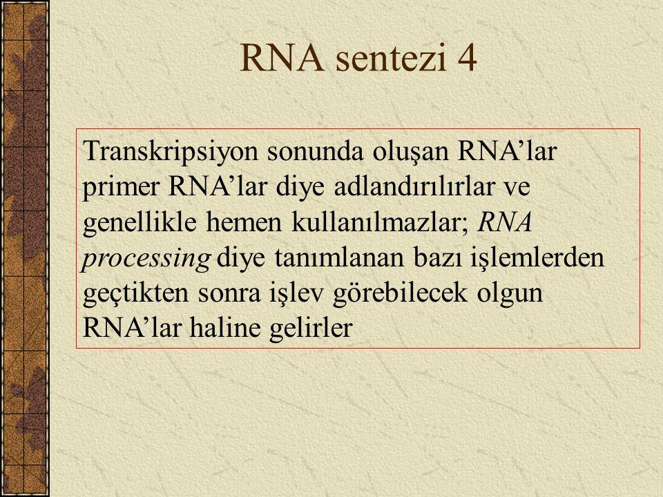 RNA sentezi 4 Transkripsiyon sonunda oluşan RNA'lar primer RNA'lar diye adlandırılırlar ve genellikle hemen kullanılmazlar; RNA processing diye tanıml