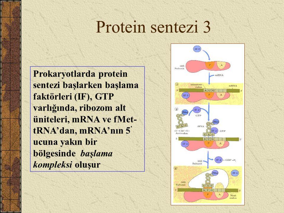 Protein sentezi 3 Prokaryotlarda protein sentezi başlarken başlama faktörleri (IF), GTP varlığında, ribozom alt üniteleri, mRNA ve fMet- tRNA'dan, mRN