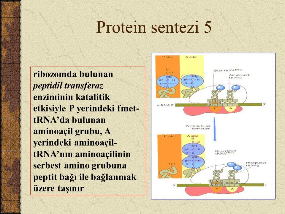 Protein sentezi 5 ribozomda bulunan peptidil transferaz enziminin katalitik etkisiyle P yerindeki fmet- tRNA'da bulunan aminoaçil grubu, A yerindeki a