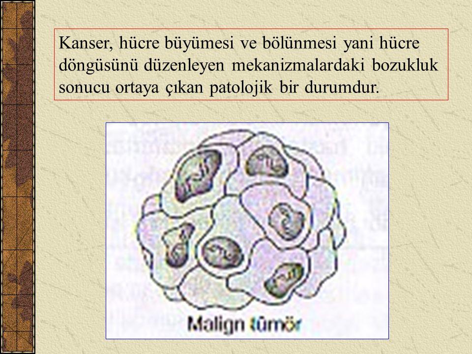 Kanser, hücre büyümesi ve bölünmesi yani hücre döngüsünü düzenleyen mekanizmalardaki bozukluk sonucu ortaya çıkan patolojik bir durumdur.