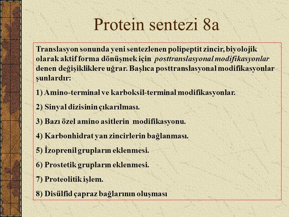 Protein sentezi 8a Translasyon sonunda yeni sentezlenen polipeptit zincir, biyolojik olarak aktif forma dönüşmek için posttranslasyonal modifikasyonla