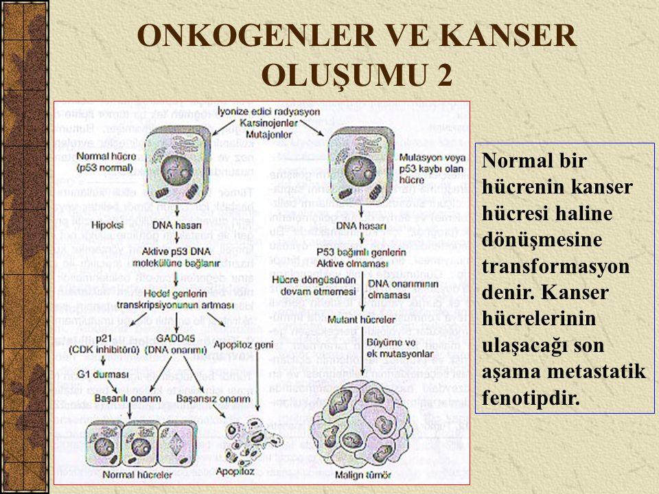 ONKOGENLER VE KANSER OLUŞUMU 2 Normal bir hücrenin kanser hücresi haline dönüşmesine transformasyon denir. Kanser hücrelerinin ulaşacağı son aşama met
