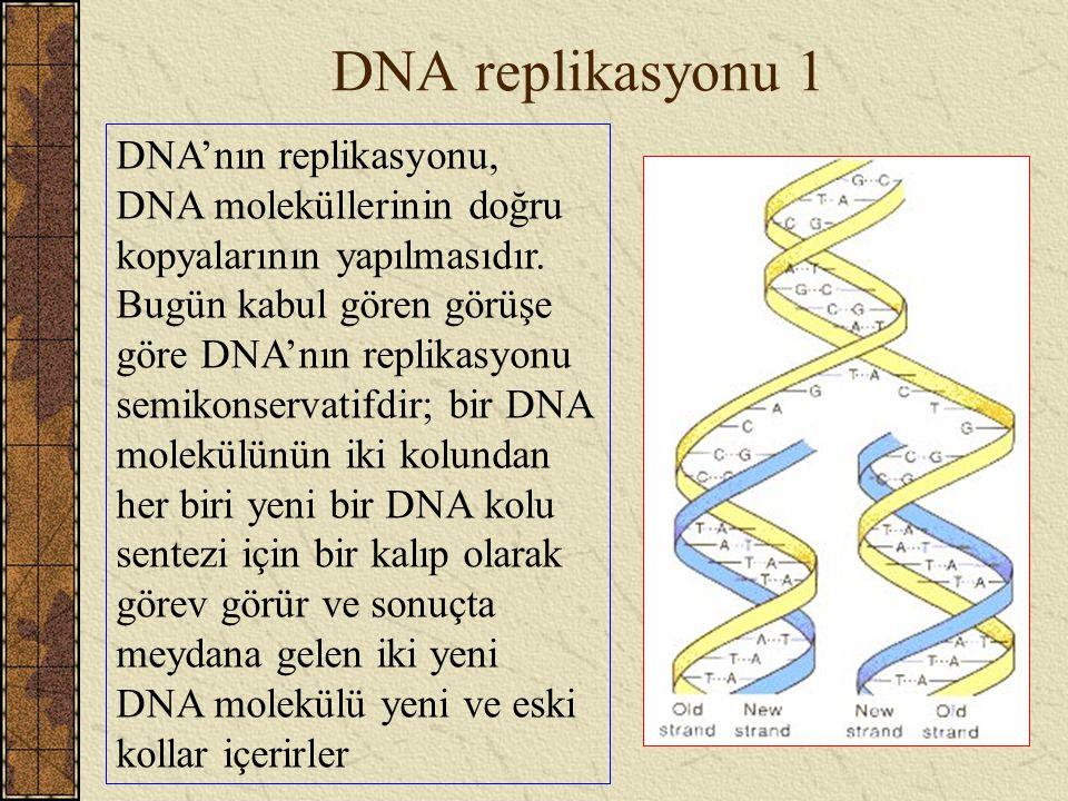 DNA replikasyonu 1 DNA'nın replikasyonu, DNA moleküllerinin doğru kopyalarının yapılmasıdır. Bugün kabul gören görüşe göre DNA'nın replikasyonu semiko