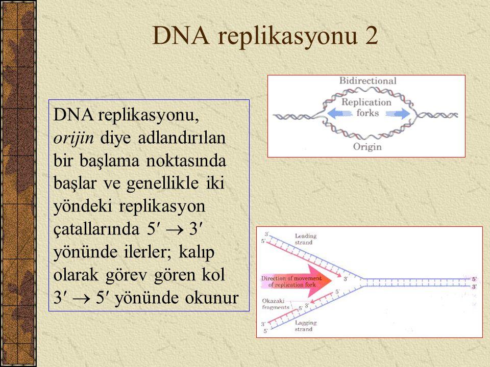 DNA replikasyonu 2 DNA replikasyonu, orijin diye adlandırılan bir başlama noktasında başlar ve genellikle iki yöndeki replikasyon çatallarında 5  3 y