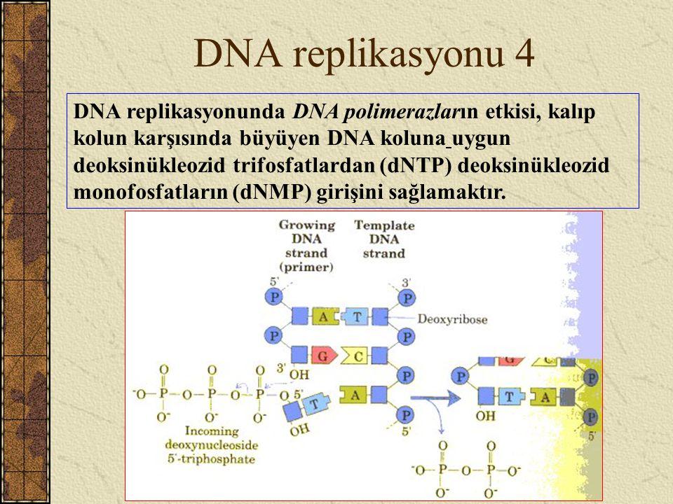 DNA replikasyonu 4 DNA replikasyonunda DNA polimerazların etkisi, kalıp kolun karşısında büyüyen DNA koluna uygun deoksinükleozid trifosfatlardan (dNT