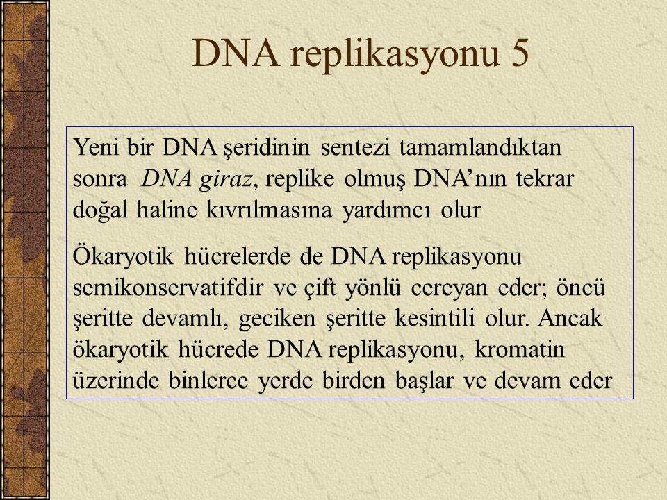 DNA replikasyonu 5 Yeni bir DNA şeridinin sentezi tamamlandıktan sonra DNA giraz, replike olmuş DNA'nın tekrar doğal haline kıvrılmasına yardımcı olur