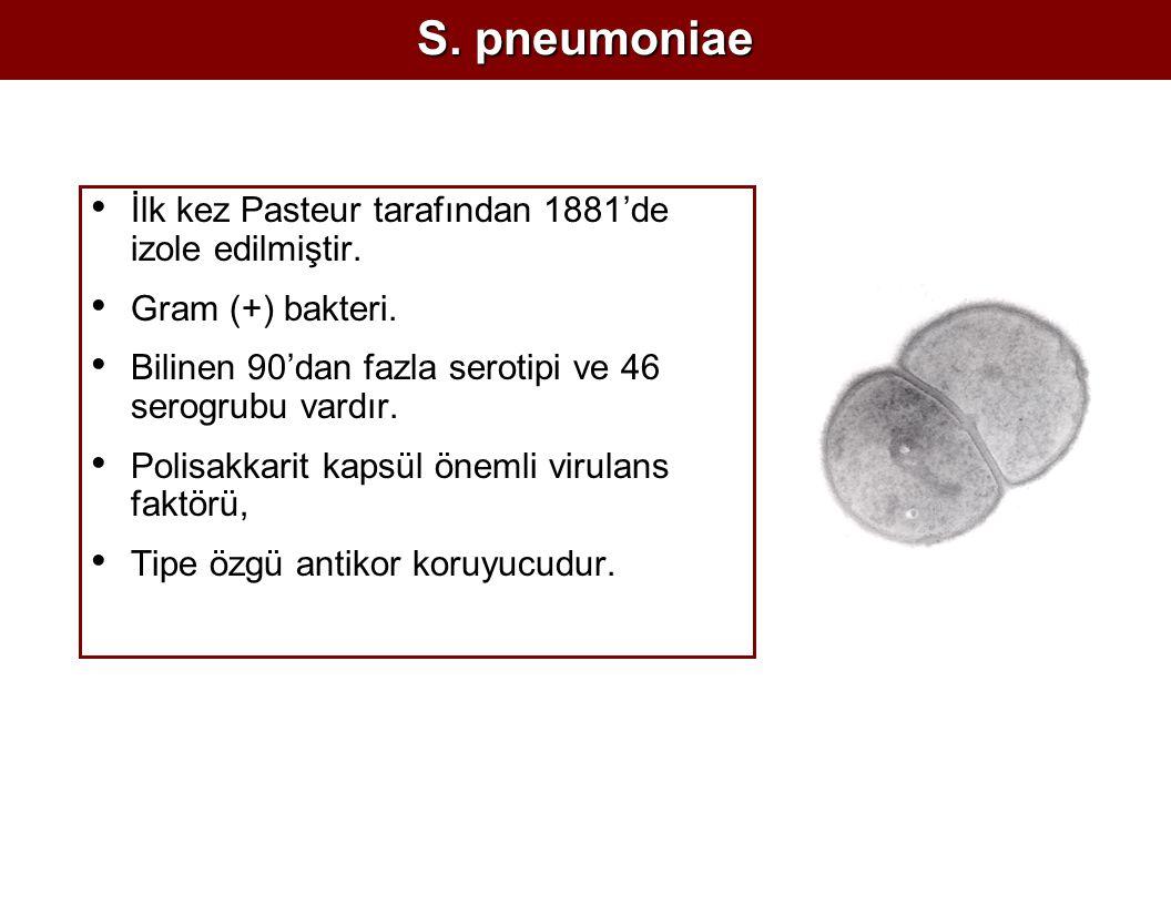 S. pneumoniae İlk kez Pasteur tarafından 1881'de izole edilmiştir. Gram (+) bakteri. Bilinen 90'dan fazla serotipi ve 46 serogrubu vardır. Polisakkari