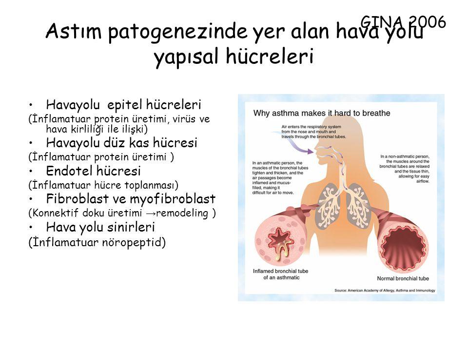 Astım patogenezinde yer alan hava yolu yapısal hücreleri Havayolu epitel hücreleri (İnflamatuar protein üretimi, virüs ve hava kirliliği ile ilişki) H