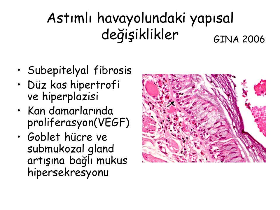 Astımlı havayolundaki yapısal değişiklikler Subepitelyal fibrosis Düz kas hipertrofi ve hiperplazisi Kan damarlarında proliferasyon(VEGF) Goblet hücre