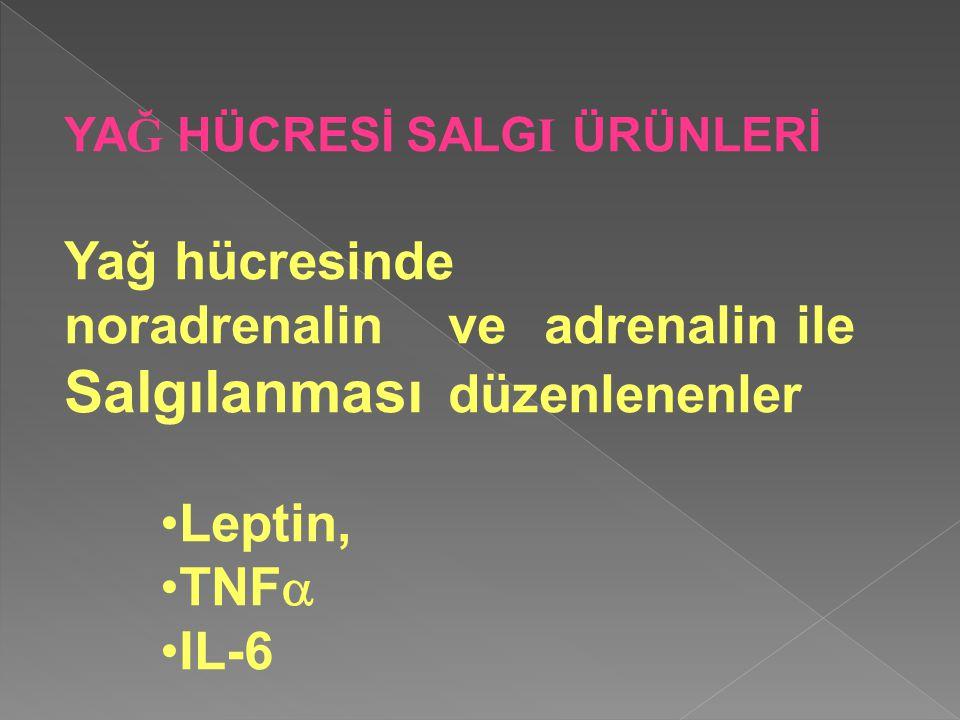 YA Ğ HÜCRESİ SALG I ÜRÜNLERİ Yağ hücresinde noradrenalin ve adrenalin ile Salgılanması düzenlenenler Leptin, TNF  IL-6