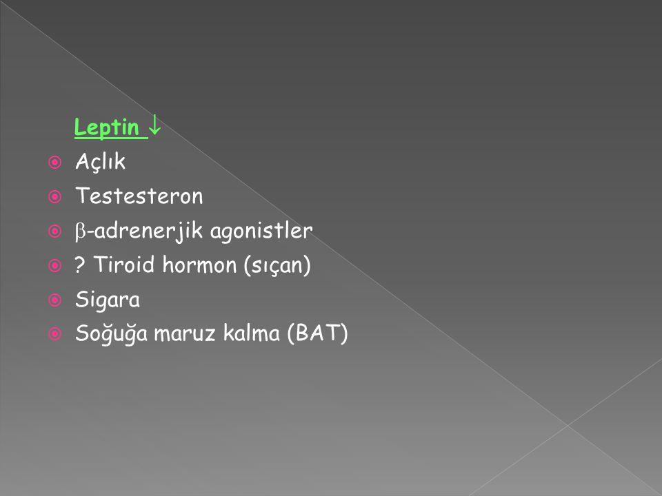 Leptin   Açlık  Testesteron   -adrenerjik agonistler  .