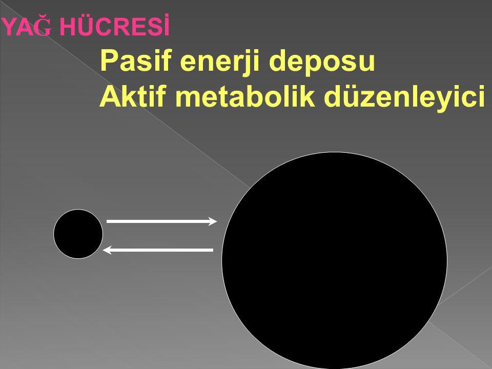 YA Ğ HÜCRESİ Pasif enerji deposu Aktif metabolik düzenleyici