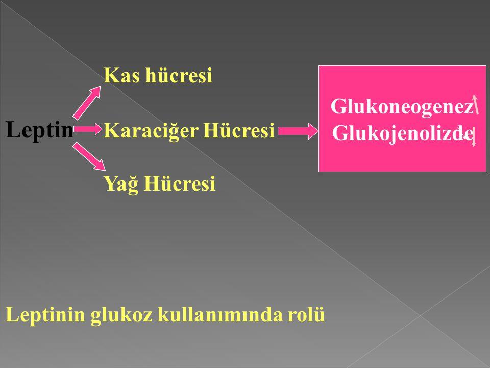 Kas hücresi Leptin Karaciğer Hücresi Yağ Hücresi Leptinin glukoz kullanımında rolü Glukoneogenez Glukojenolizde