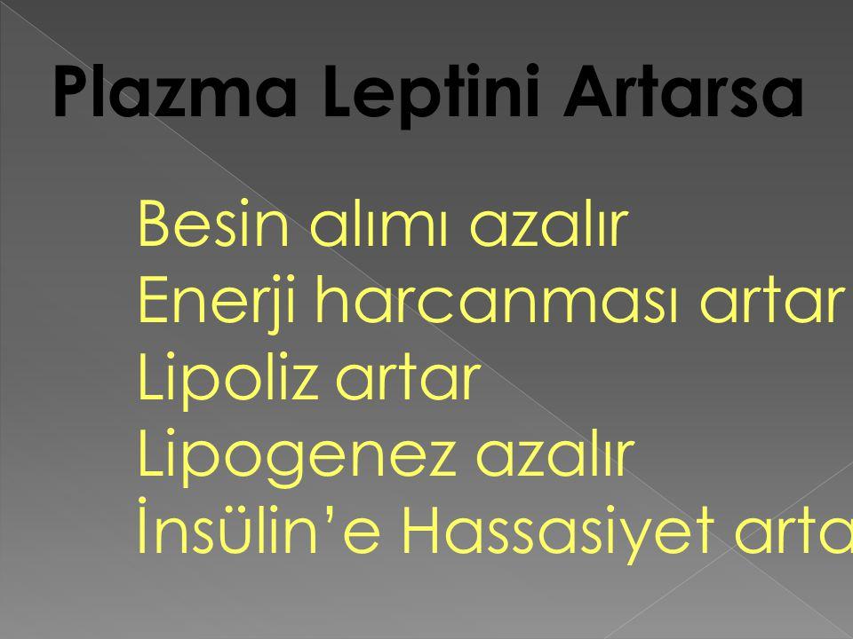 Plazma Leptini Artarsa Besin alımı azalır Enerji harcanması artar Lipoliz artar Lipogenez azalır İnsülin'e Hassasiyet artar
