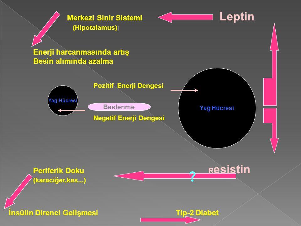 Merkezi Sinir Sistemi Leptin (Hipotalamus)) Enerji harcanmasında artış Besin alımında azalma Pozitif Enerji Dengesi Negatif Enerji Dengesi Periferik Doku R esistin (karaciğer,kas...) İnsülin Direnci Gelişmesi Tip-2 Diabet Yağ Hücresi Beslenme ?