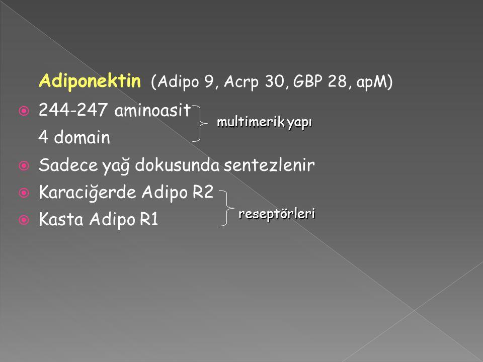 Adiponektin (Adipo 9, Acrp 30, GBP 28, apM)  244-247 aminoasit 4 domain  Sadece yağ dokusunda sentezlenir  Karaciğerde Adipo R2  Kasta Adipo R1 reseptörleri multimerik yapı