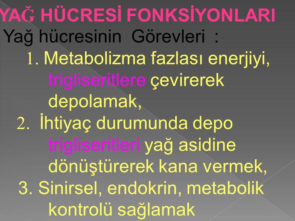 Yağ hücresinin Görevleri : 1. Metabolizma fazlası enerjiyi, trigliseritlere çevirerek depolamak, 2. İhtiyaç durumunda depo trigliseritleri yağ asidine