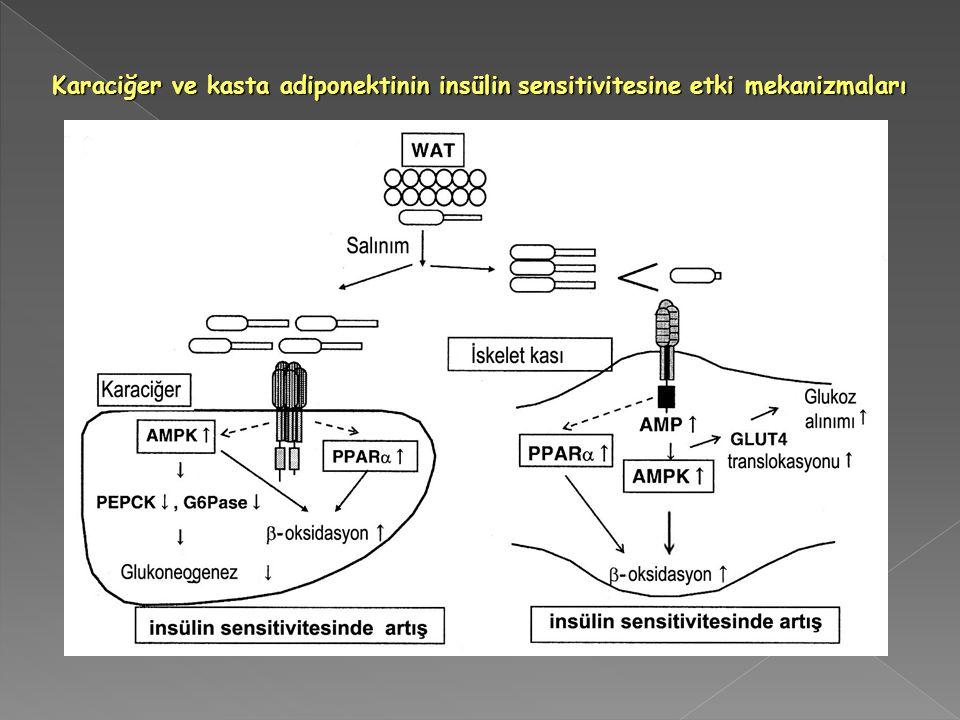 Karaciğer ve kasta adiponektinin insülin sensitivitesine etki mekanizmaları