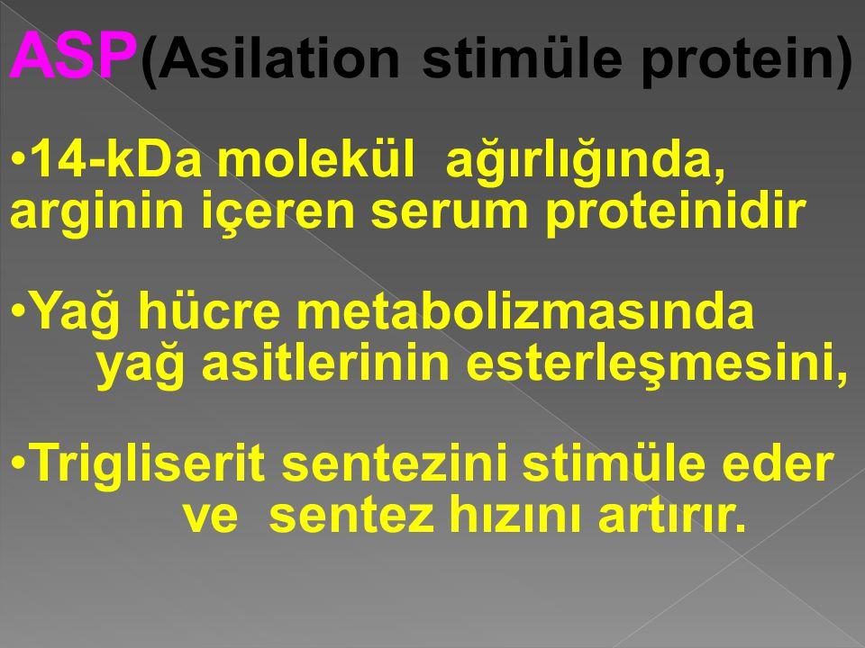 ASP (Asilation stimüle protein) 14-kDa molekül ağırlığında, arginin içeren serum proteinidir Yağ hücre metabolizmasında yağ asitlerinin esterleşmesini, Trigliserit sentezini stimüle eder vesentez hızını artırır.