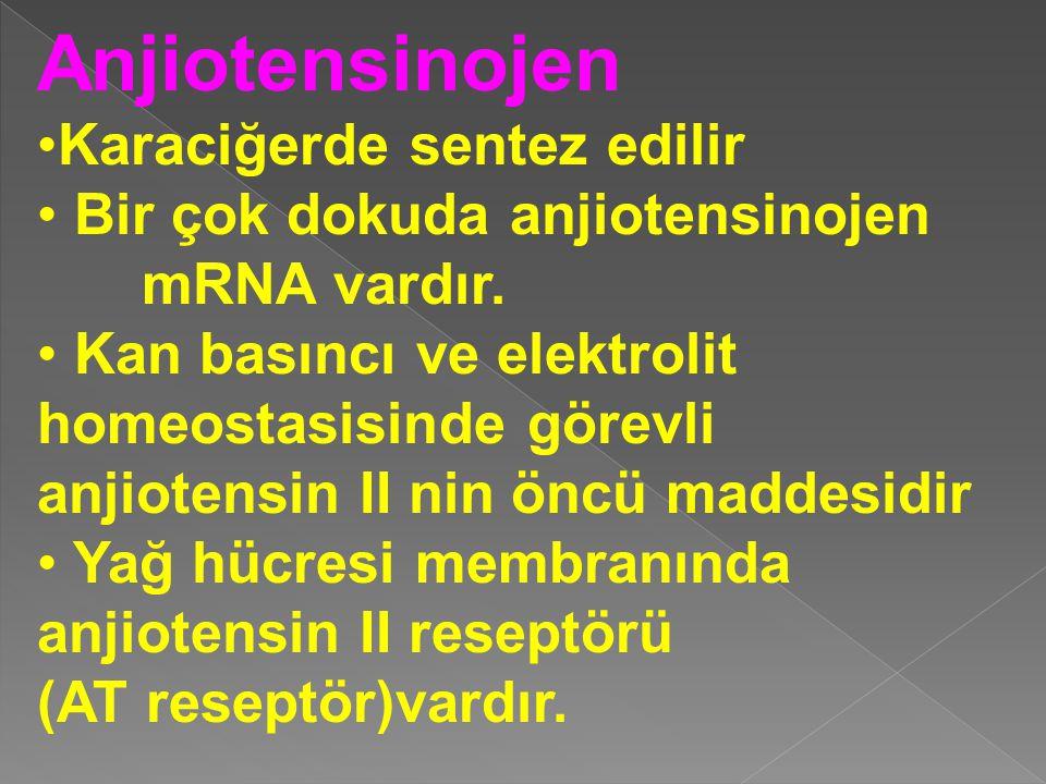 Anjiotensinojen Karaciğerde sentez edilir Bir çok dokuda anjiotensinojen mRNA vardır. Kan basıncı ve elektrolit homeostasisinde görevli anjiotensin II