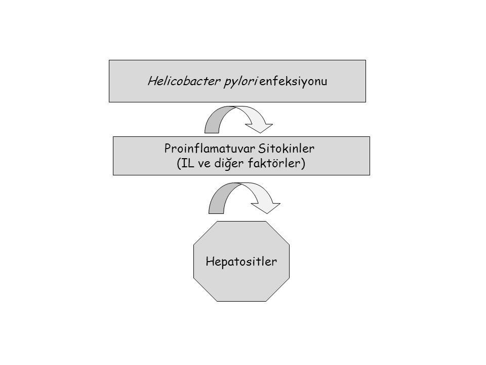 Helicobacter pylori enfeksiyonu Proinflamatuvar Sitokinler (IL ve diğer faktörler) Hepatositler