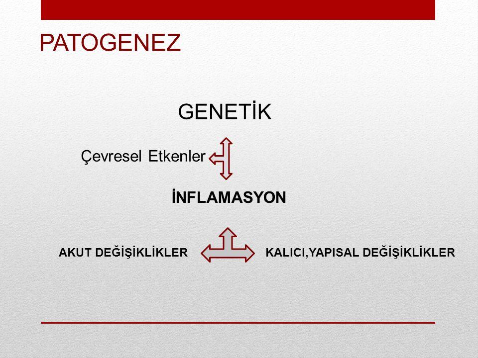 Th2 Lenfosit Kronik Eozinofilik İnflamasyon Subepitelyal fibrozis Düz kas hipertrofisi Goblet hücre hiperplazisi Revaskülarizasyon Epitel yıkımı ECP MBP NO GF ler IL-3, IL-5 GM-CSF Eozinofil Mast hücresi IL-4 IL-5 IL-3 SCF IL-4 IL-13 IgE B Lenfosit Akut İnflamatuvar Ataklar Bronkospazm Vazodilatasyon Permeabilite artışı Ödem Mukus sekresyonu Histamin LTC 4 PGD 2