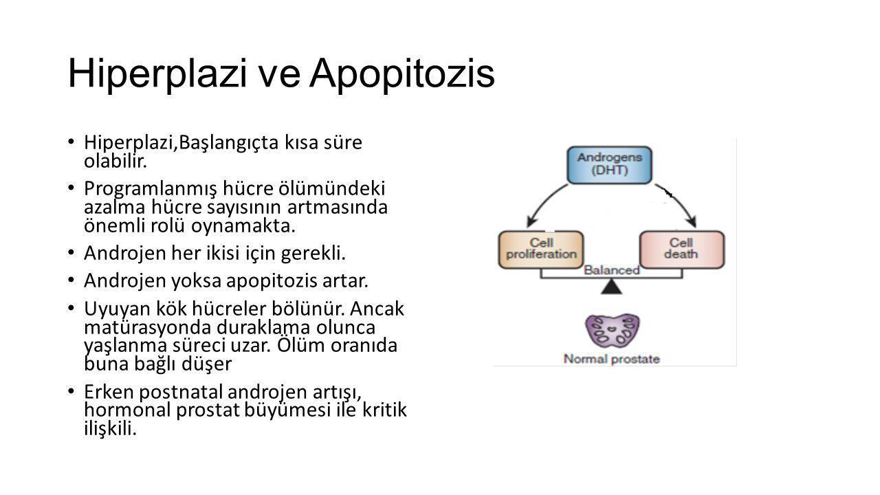 Hiperplazi ve Apopitozis Hiperplazi,Başlangıçta kısa süre olabilir. Programlanmış hücre ölümündeki azalma hücre sayısının artmasında önemli rolü oynam