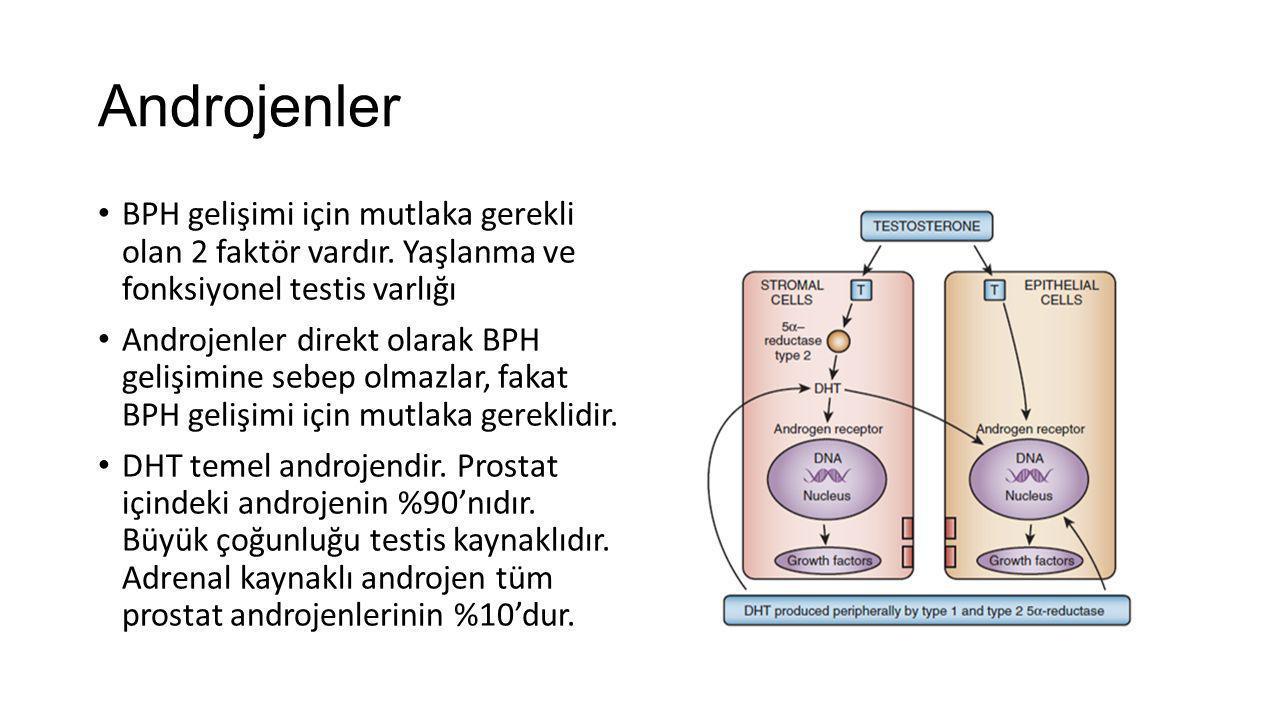 Androjenler BPH gelişimi için mutlaka gerekli olan 2 faktör vardır. Yaşlanma ve fonksiyonel testis varlığı Androjenler direkt olarak BPH gelişimine se