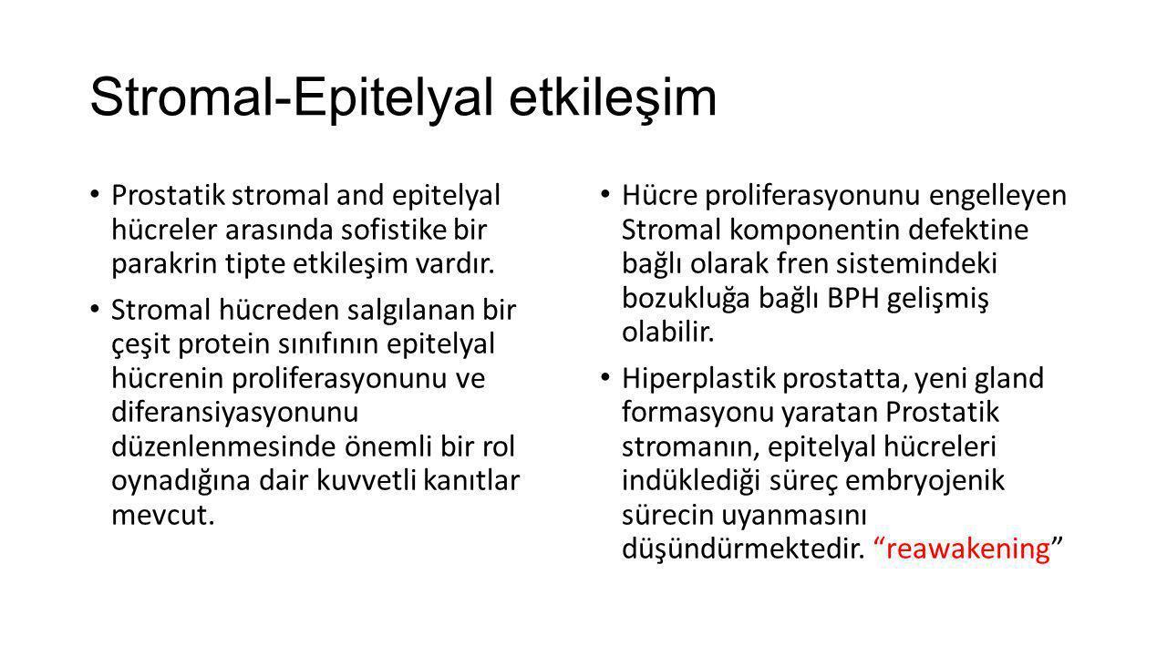 Stromal-Epitelyal etkileşim Prostatik stromal and epitelyal hücreler arasında sofistike bir parakrin tipte etkileşim vardır. Stromal hücreden salgılan