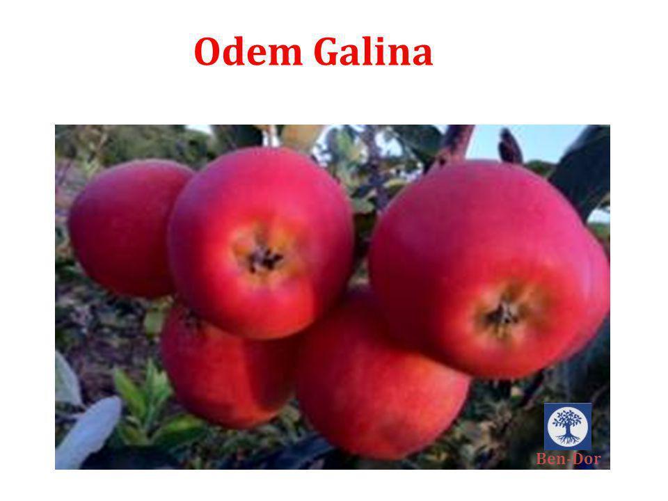 Odem Galina