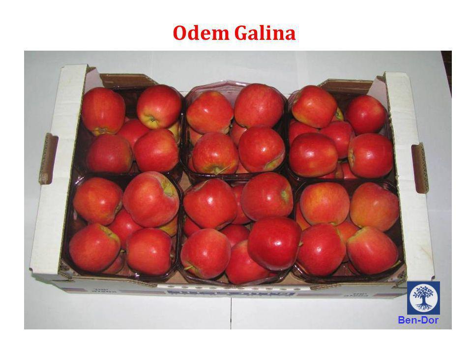 Odem Galina Ben-Dor