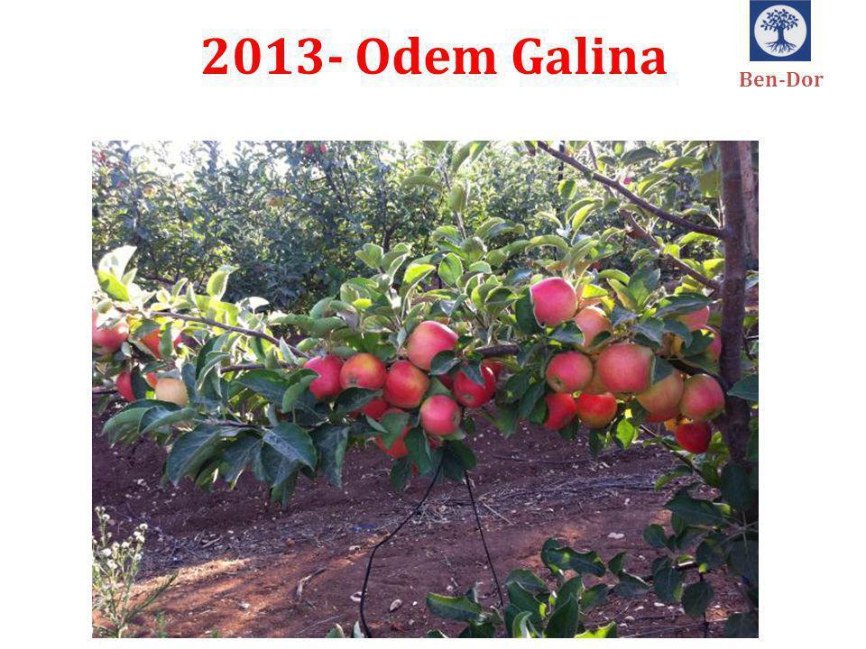 2013- Odem Galina Ben-Dor