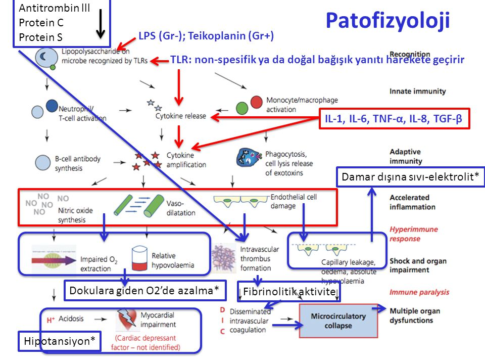 Patofizyoloji TLR: non-spesifik ya da doğal bağışık yanıtı harekete geçirir LPS (Gr-); Teikoplanin (Gr+) IL-1, IL-6, TNF-α, IL-8, TGF-β Damar dışına s