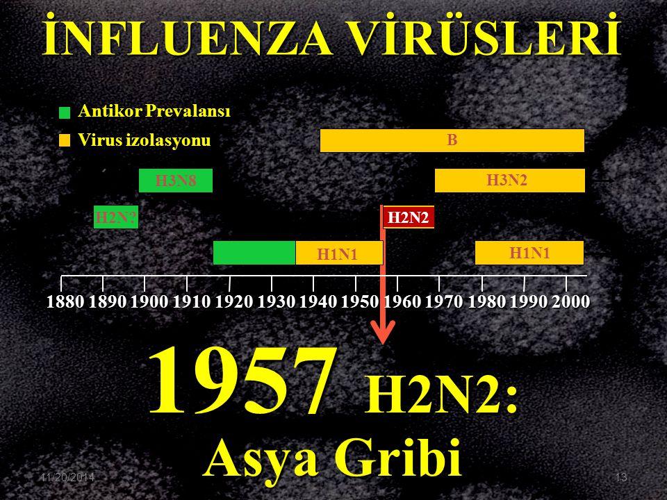 1957 H2N2: Asya Gribi B H3N2 H1N1 H2N2 H3N8 H2N? H1N1 1880189019001910192019301940195019601970198019902000 İNFLUENZA VİRÜSLERİ Antikor Prevalansı Viru