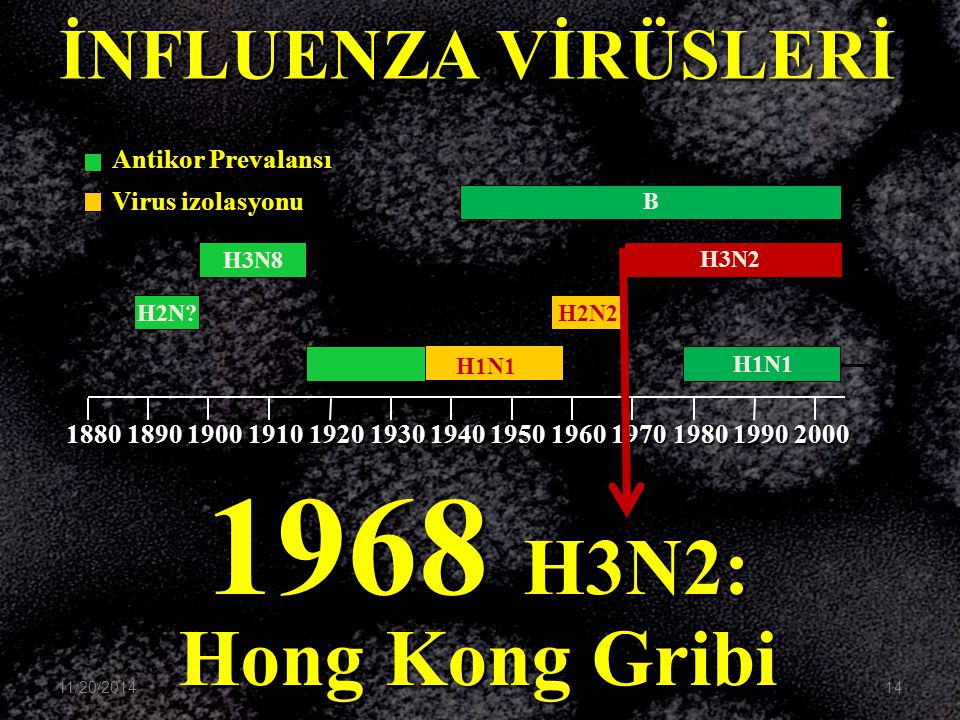 1968 H3N2: Hong Kong Gribi B H3N2 H1N1 H2N2 H3N8 H2N? H1N1 1880189019001910192019301940195019601970198019902000 İNFLUENZA VİRÜSLERİ Antikor Prevalansı