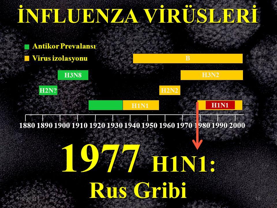1977 H1N1: Rus Gribi B H3N2 H1N1 H2N2 H3N8 H2N? H1N1 1880189019001910192019301940195019601970198019902000 İNFLUENZA VİRÜSLERİ Antikor Prevalansı Virus