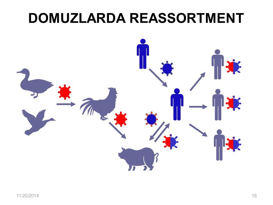 DOMUZLARDA REASSORTMENT 11/20/201418