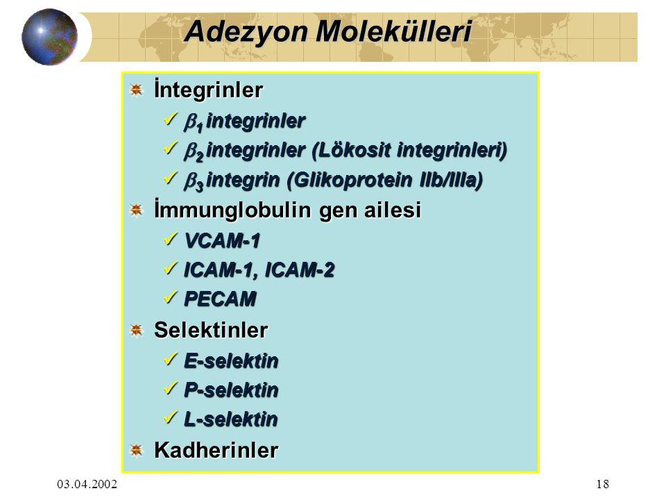 03.04.200218 İntegrinler  1 integrinler  1 integrinler  2 integrinler (Lökosit integrinleri)  2 integrinler (Lökosit integrinleri)  3 integrin (Glikoprotein IIb/IIIa)  3 integrin (Glikoprotein IIb/IIIa) İmmunglobulin gen ailesi VCAM-1 VCAM-1 ICAM-1, ICAM-2 ICAM-1, ICAM-2 PECAM PECAM Selektinler E-selektin E-selektin P-selektin P-selektin L-selektin L-selektin Kadherinler Adezyon Molekülleri