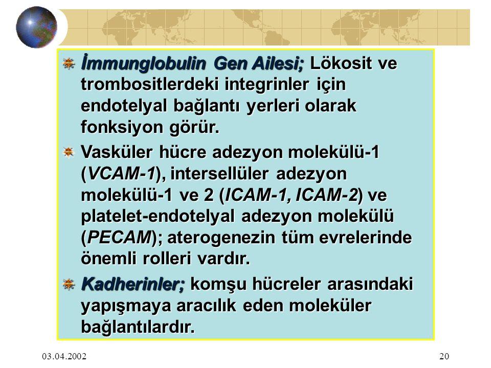 03.04.200220 İmmunglobulin Gen Ailesi; Lökosit ve trombositlerdeki integrinler için endotelyal bağlantı yerleri olarak fonksiyon görür. Vasküler hücre