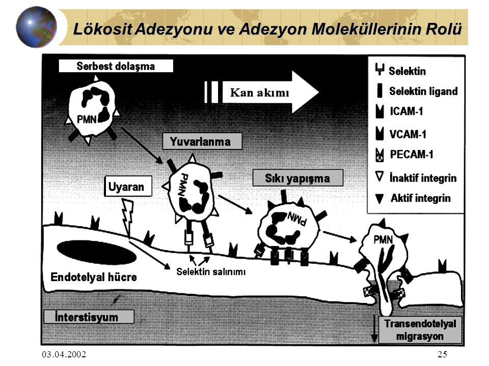 03.04.200225 Lökosit Adezyonu ve Adezyon Moleküllerinin Rolü