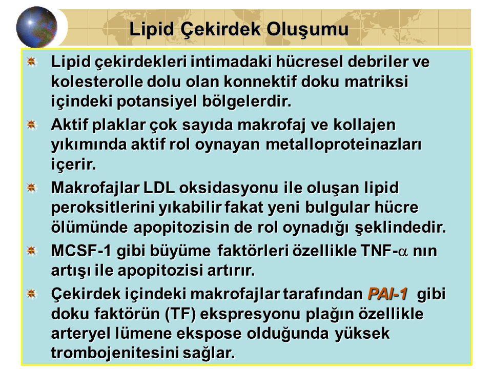 03.04.200232 Lipid Çekirdek Oluşumu Lipid Çekirdek Oluşumu Lipid çekirdekleri intimadaki hücresel debriler ve kolesterolle dolu olan konnektif doku matriksi içindeki potansiyel bölgelerdir.