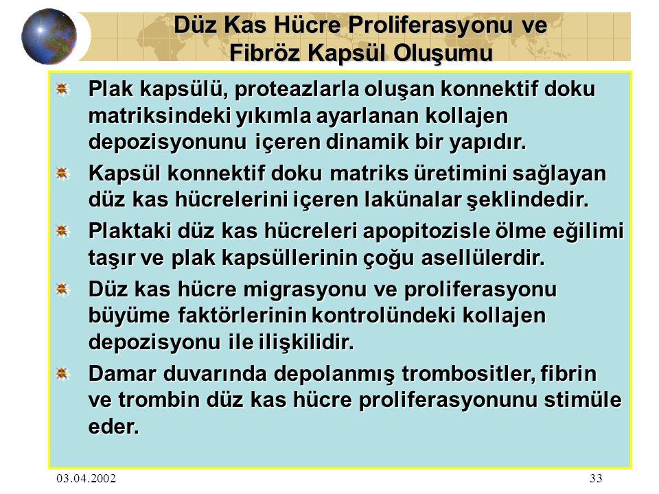 03.04.200233 Düz Kas Hücre Proliferasyonu ve Fibröz Kapsül Oluşumu Plak kapsülü, proteazlarla oluşan konnektif doku matriksindeki yıkımla ayarlanan ko