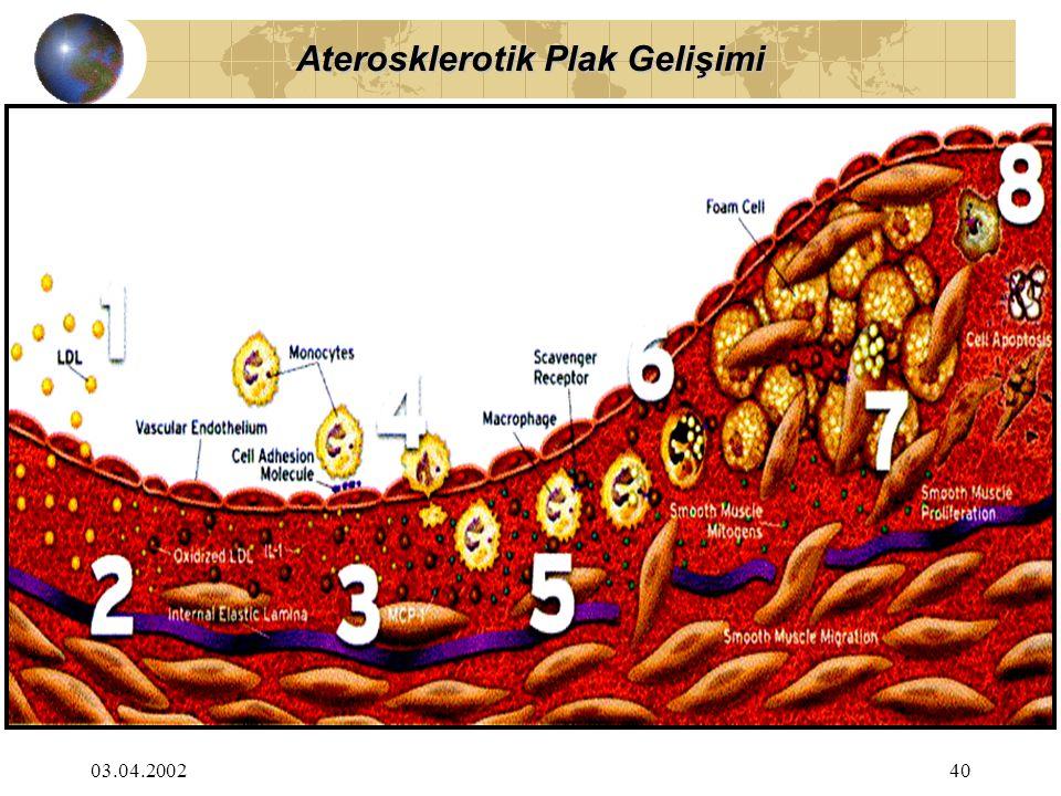 03.04.200240 Aterosklerotik Plak Gelişimi