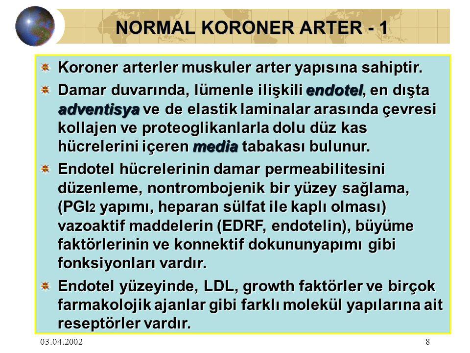 03.04.20028 NORMAL KORONER ARTER - 1 NORMAL KORONER ARTER - 1 Koroner arterler muskuler arter yapısına sahiptir. Damar duvarında, lümenle ilişkili end