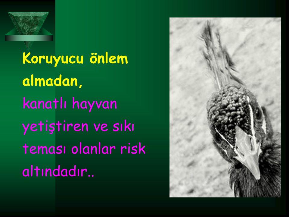 Koruyucu önlem almadan, kanatlı hayvan yetiştiren ve sıkı teması olanlar risk altındadır..